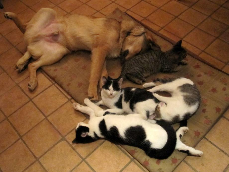 Stubbs & cats