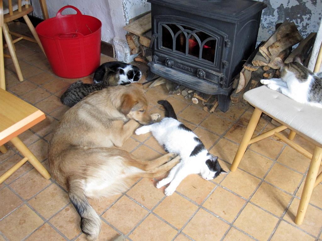 Stubbs, cats & a fire
