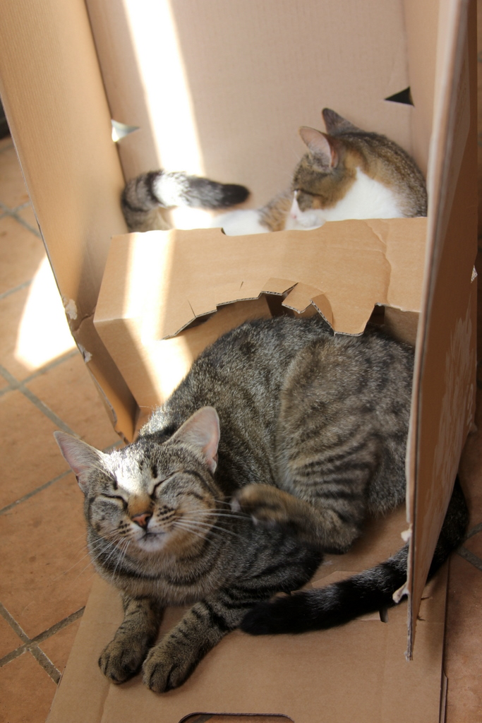 The house cats like nothing better than a new cardboard box