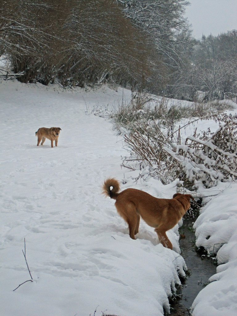 Rufus and Stubbs just love the snow!