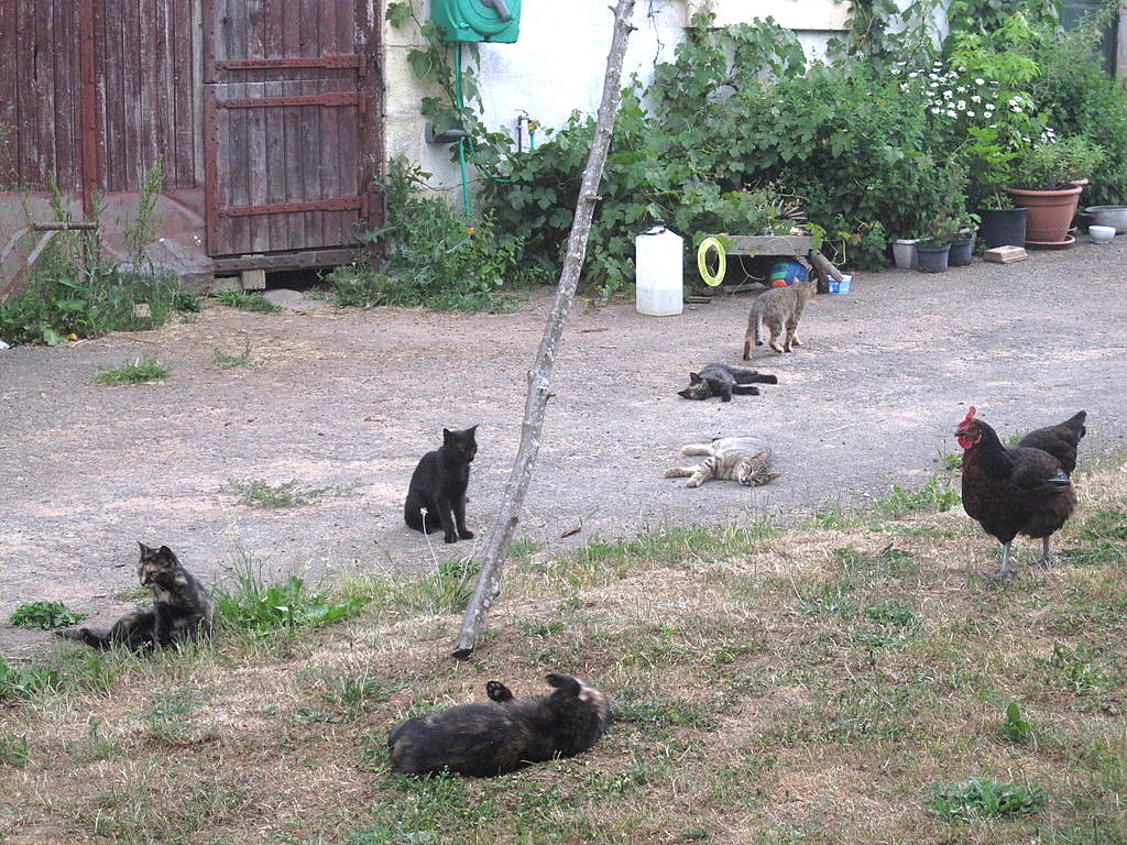 It\'s evening, and the barn cats occupy the yard