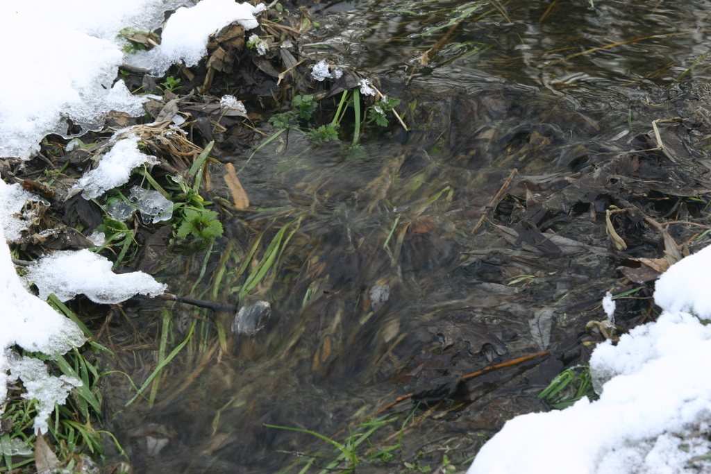 Our stream has flowed throughout the freeze