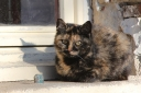 The multi-coloured kitten often sits on the window sill - but has never come into the house