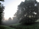 Atmospheric early morning oaks