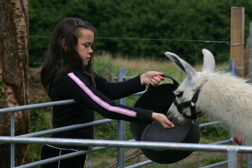 Ella and Lilas - youngest human with youngest llama