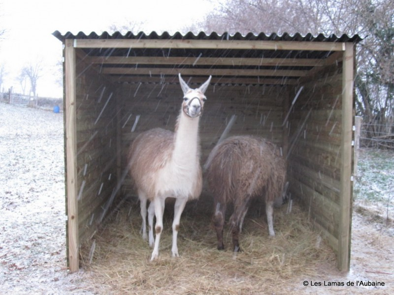 Llama field shelter
